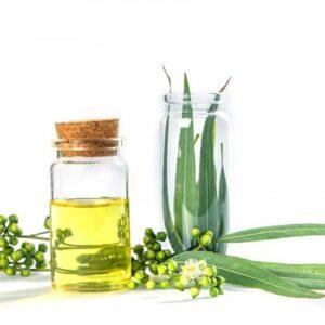 Eucalyptus Oil| NosgOrgano