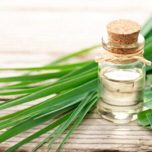 Lemongrass Oil| NosgOrgano